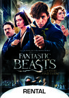 Fantastic Beasts and Where to Find Them dvd cover image