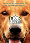 A Dog's Purpose dvd cover image